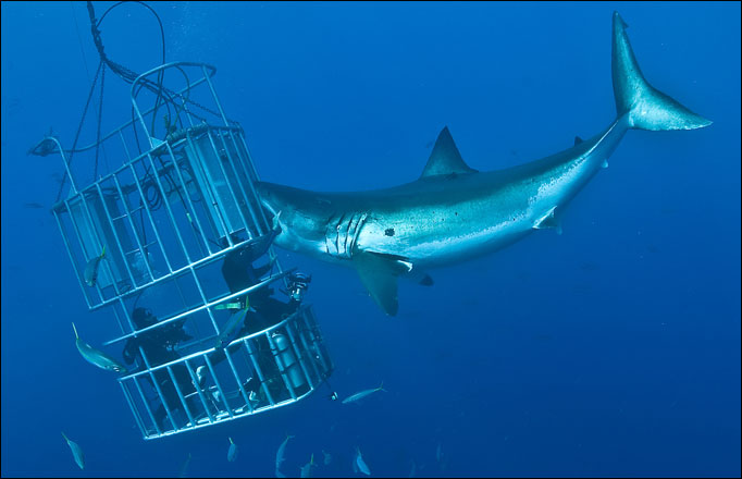 how to build a shark cage